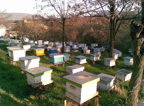 Gallery of the Kazimir Ltd - Krasimir Kolev - Royal Jelly - BulgarianAgriculture.com
